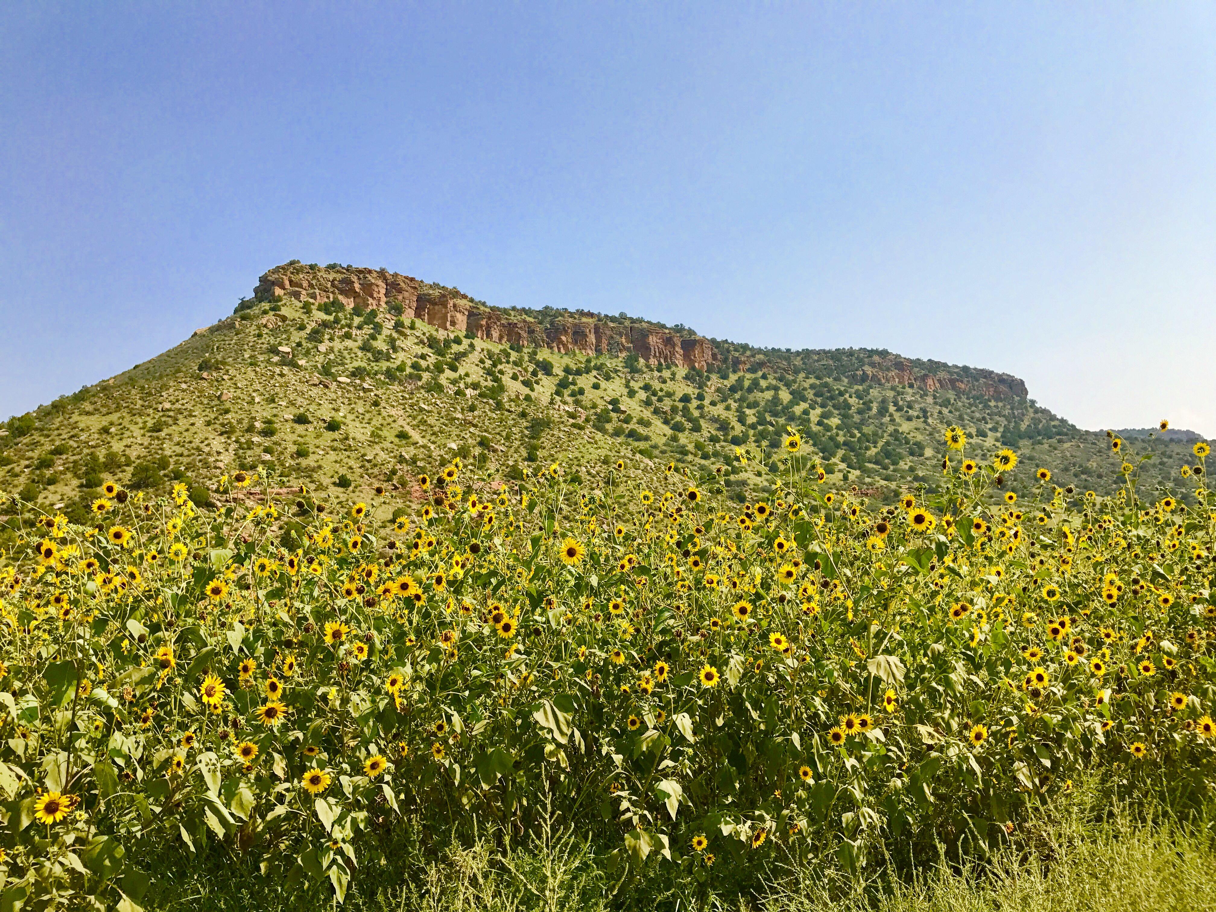 New Mexico Backroad 9.4.17